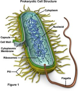 Sel Prokaryotik
